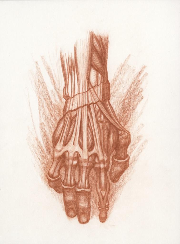 Michael Hensley, Artistic Human Anatomy, The Human Hand & Foot