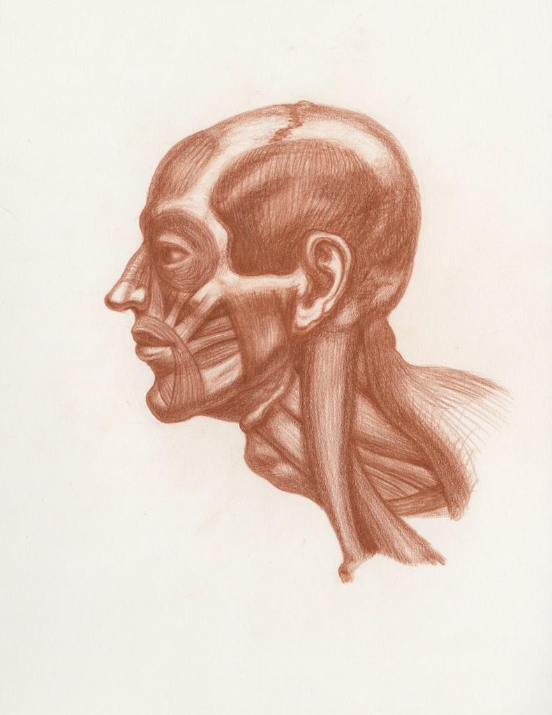 Michael Hensley, Artistic Human Anatomy, The Human Head