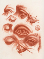 Anatomical Study, Features, Eyes