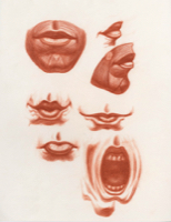 Anatomical Study, Features, Mouth