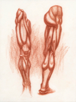 Anatomical Study, Lower Extremity 1