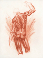Anatomical Study, Torso 1