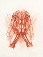 Anatomical Study, Torso 11