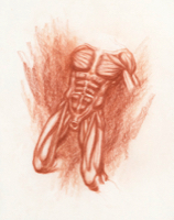 Anatomical Study, Torso 4