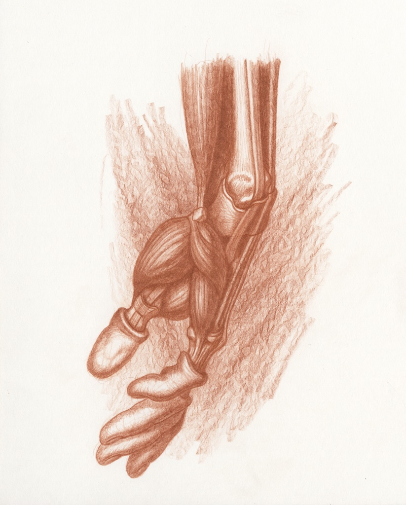 Michael Hensley, Artistic Human Anatomy, The Upper Extremity & Hand