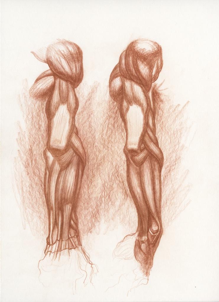 Michael Hensley Artistic Human Anatomy The Upper Extremity Hand