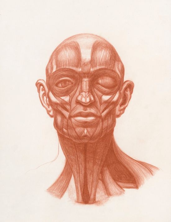 Anatomical Study of the Human Head by Michael M Hensley