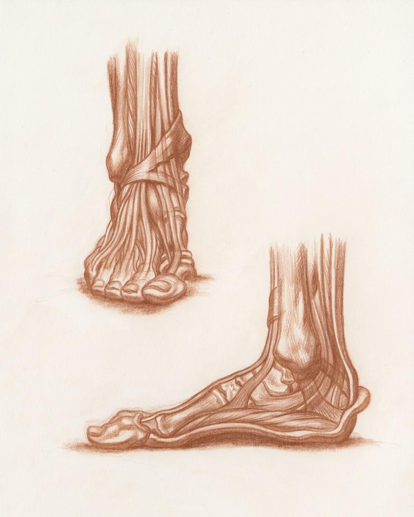 Michael Hensley, Artistic Human Anatomy, Life Drawing The Human Foot