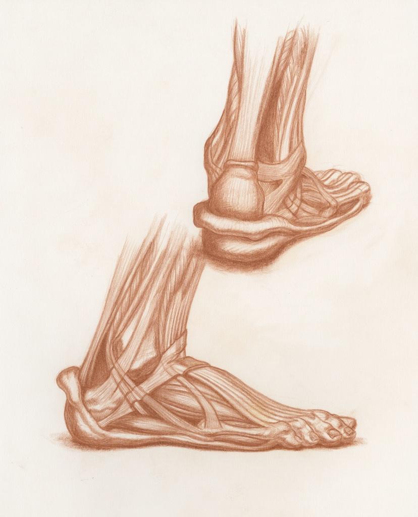 Michael Hensley Artistic Human Anatomy Life Drawing The Human Foot